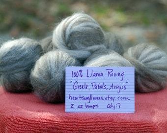 3 Bumps 100% Llama Roving - DDH's Gisele, Heartsong Velvet Petals & Heartsong Angus
