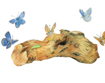 LIMITED EDITION of Blues,  Blue Butterflies, A Woodblock with Blue Butterflies, Icarus Woodland Scene of Earth Wood and Heavenly Butterflies