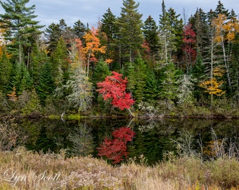 New Hampshire Photography -  Nature photography, River, fall, autumn, fine art print, leaves, new england, cabin decor, wall art