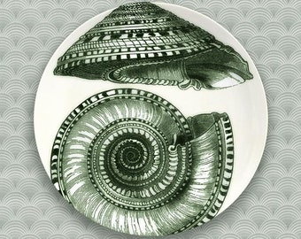 solium shell, sea spray green melamine plate