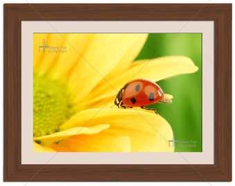 Lady Bug/Bird Yellow Floral Flower Photographic Print - Various Sizes - Gift Idea