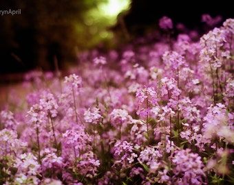 Purple bliss, Wild Flowers, Flower Photography, Bokeh, Nature, 5x7, 8x12, 16x24, 24x36