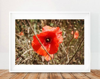 Poppies Printable Wall Art, Rome Wall Art Print, Large Printable Poppies, Poppy Wall Art, Italy Wall Art Print, Italy Wall Decor, Download