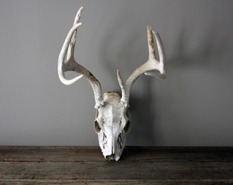 Large Set of Vintage Natural Sun Bleached Deer Antlers