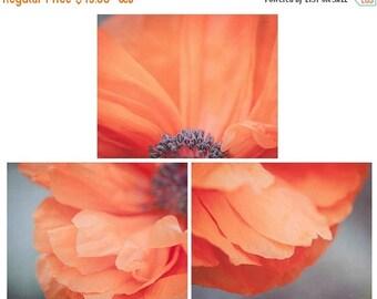 SALE - Set of 3 Poppy Flower Photographs, Flower Print Set, Your Choice of Size, Fine Art Photography, Orange, Gray, Nature, Photo Collectio