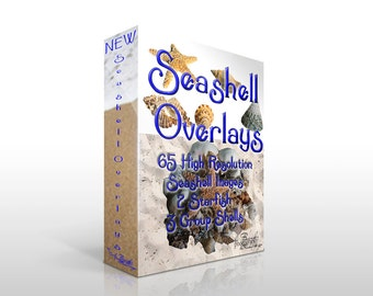 65+ High Resolution Seashell Png images for use as an overlay/composites