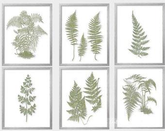 Fern Wall Art,Fern Print Set, Sage Green Wall Art, Fern Botanical,