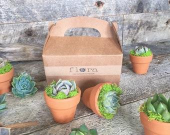 Miniature Succulent Pot Set