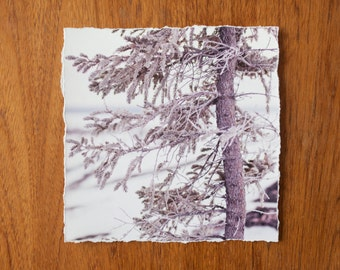 Frosted Tree 9x9 inch giclee fine art photography print with torn edge