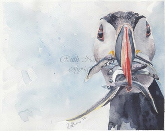 PUFFINS LUNCH mounted watercolour print by Ruth Nolan