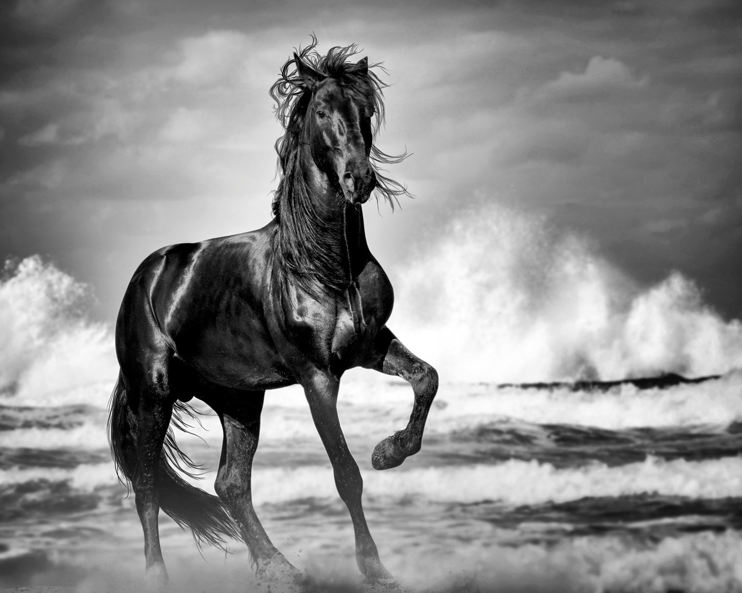 Black And White Photography Wall Art wild horse print black stallion horse art print horse