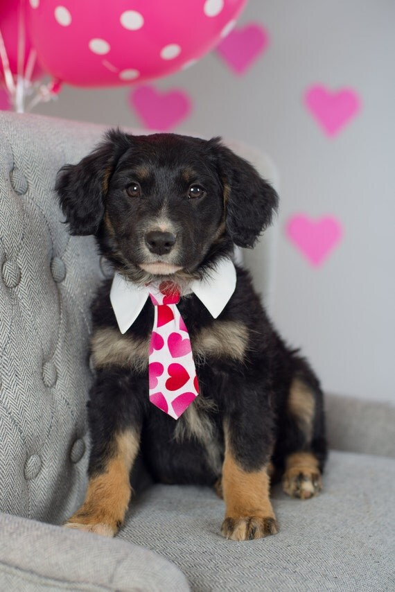 Valentine's White with Pink & Red Hearts Neck Tie for Cats and Dogs - Collar Accessories for Dogs!