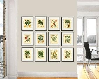 Kitchen Herbs wall art antique botanical print set of 12 herb art print kitchen poster  kitchen decor wall antique wall art herb wall decor