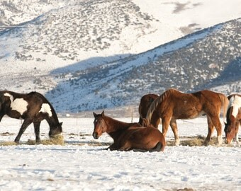 Ruby Mountain Horses,  Fine Art Print, Wall Art
