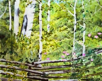Original watercolor painting landscape paintings fine art watercolor painting original forest fence wildroses aspen trees aspen art Colorado