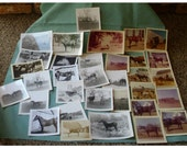 33 vintage photos of horses mix group of images from estate