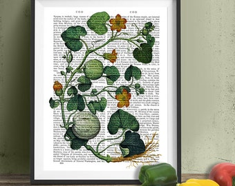 Squash Vine 2 - botanical print kitchen print kitchen decor dining room decor food illustration wall art gourmet gift idea gift for cook