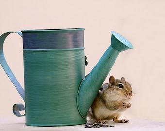 Chipmunk Print, Watering Can, Garden Art, Gardener Gift, Cute Animals, Wildlife Prints, Woodland Print, Nature Photography, Wildlife Photo