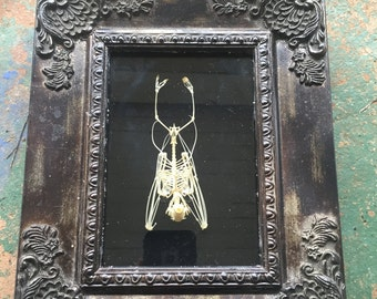 Bat skeleton shadow box