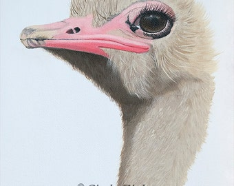 Ostritch,Giclee Print From Original Acrylic Painting, Various Sizes