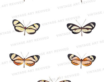 Butterfly Collage Digital Download Illustration - No.3501