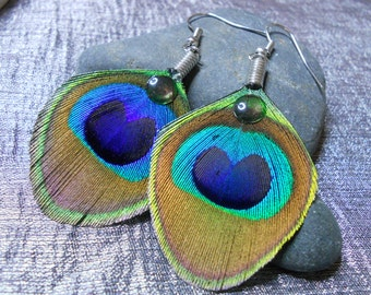 Feather natural Peacock and transparent ball earrings.