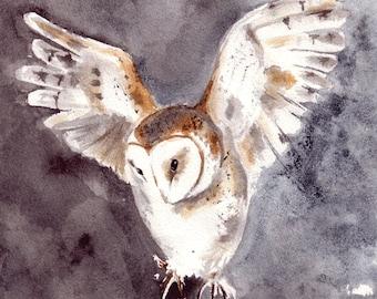 Fine Art Print A4: Barn owl (Tyto alba)