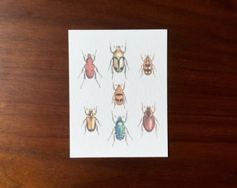Colorful Beetles Postcards multipack post cards letter card mailing postal holiday travel notecard notes logo free