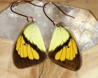 Stunning Genuine Butterfly wing earrings: yellow, brown, orange with copper hooks/butterfly wing earrings/wing earrings/fairy wing earrings/