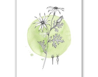 Flannel Flower on Green | A4 Art Print