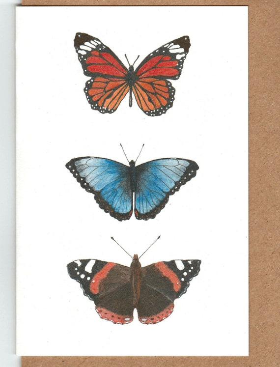 Tarjeta de mariposa. Tres imágenes de la mariposa. Almirante
