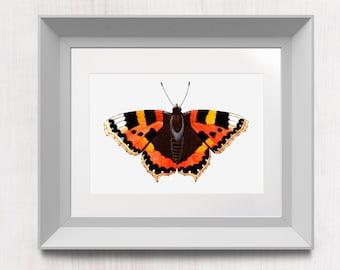 Tortoiseshell butterfly, Aglais urticae. Butterfly art print. Animal watercolour illustration. Nature paint home decor