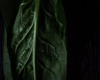 Food Photography, Still Life, Wall Art, Home Decor, Kitchen Art, Spinach, Garden