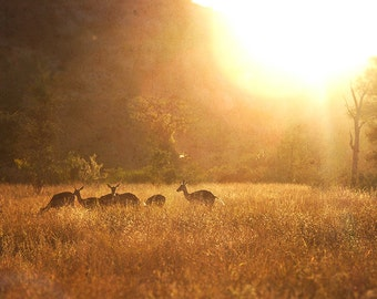 South Africa Photography, Nature Photography, Impala Sunset, Fine Art Print, Fine Art Photography, Wall Decor, Safari Art