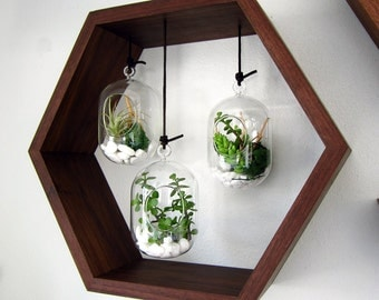 Hexagon Hanging Terrarium Garden - Black Walnut - Wall Mounted