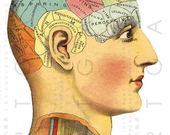 Antique ILLUSTRATION PHRENOLOGY HEAD. 19thC Science Of The Mind Chart. Vintage Phrenology Print. Digital Phrenology Download.