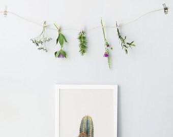 Cactus art print - Cactus photo print - Minimalist wall decor - Minimalist cactus print - Succulent photo print - Cactus printable art