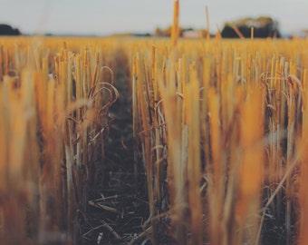 Straw - Fields - Straw Photo - Field Photo - Digital Photo - Digital Download - Instant Download - JPG