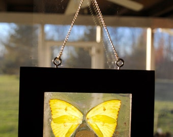 Butterfly Stained Glass