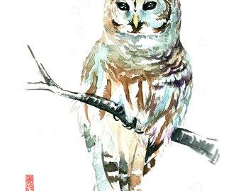 "ORIGINAL Barred Owl Watercolor Painting - 11"" x 14"" (27.9cm x 35.6cm)"