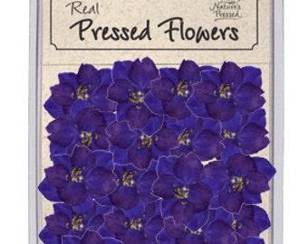 Purple Larkspur  25 Pieces