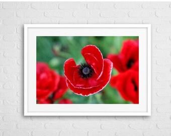 Red Poppy Art Photo Framed
