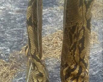 Vtg full python cowboy boot