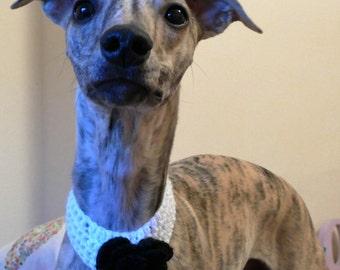 Tailswagger Black Rose Crochet Collar
