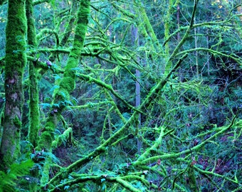 Magical Mossy Branches Nature Print