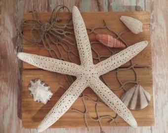 Starfish and Shells Wall Plaque