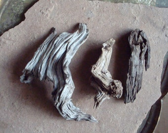 Desert Wood Root Twisted Spiral Shaped Pieces for Crafts Assemblage Mixed Media Supplies Natural Organic Found Object