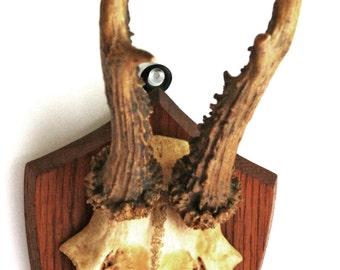 Vintage Woodland Deer Antler Mount on Wood Plaque