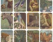 Moscow ZOO, Photos by E. Ignatovich. Complete Set of 16 Vintage Postcards in original cover -- 1959. Cover by V. Vatagin. Perfect condition