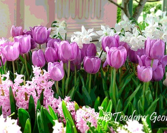 Purple Tulips and Hyacinths Photography, Flower photo, spring